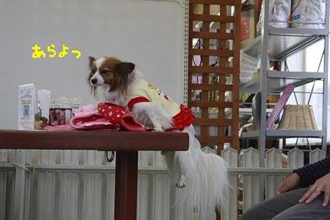 姫 懸垂.jpg